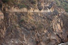 飞跃峡谷的老虎 免版税库存图片