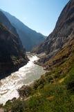 飞跃峡谷香格里拉瓷的老虎 库存图片