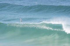 飞跃波浪的海豚 免版税库存图片