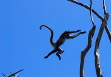 飞跃猴子 免版税库存照片