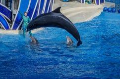 飞跃鲸鱼的凶手 库存图片