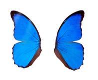 飞过在白色隔绝的蓝色蝴蝶 免版税库存图片