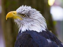 飞过的掠食性动物 免版税库存照片