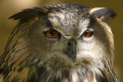 飞过的掠食性动物 库存图片