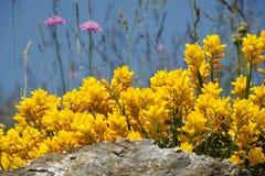 飞过的染色用植物 免版税库存照片