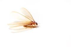 飞过的白蚁 图库摄影