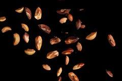 飞过的种子 库存图片