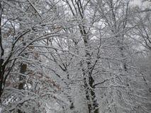 飞雪冬天 免版税库存图片