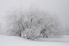 飞雪加盖的雪结构树 库存图片