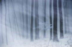 飞雪在有雾的一个森林里和雪在冬天 免版税库存图片