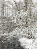 飞雪横向冬天 免版税库存图片
