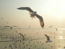 飞鸟 免版税图库摄影