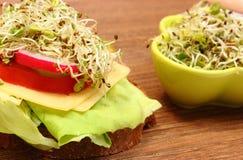 素食三明治和碗用紫花苜蓿和萝卜发芽 图库摄影