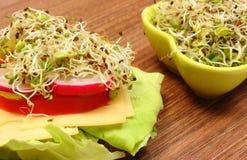 素食三明治和碗用紫花苜蓿和萝卜发芽 免版税库存图片