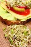 素食三明治用紫花苜蓿和萝卜新芽 免版税库存照片