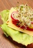 素食三明治用紫花苜蓿和萝卜新芽 库存照片