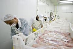 食品加工 免版税库存照片
