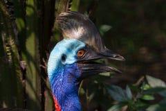 食火鸡鸟的各种各样的图片 图库摄影