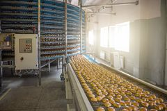 食物工厂制造、工业传送带或者线与甜曲奇饼的准备,食物生产的过程 免版税库存图片