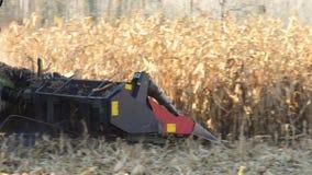 食物工厂,食物,切雷亚拖拉机倾销麦子五谷 影视素材