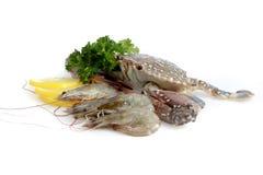 食物新海运种类 免版税图库摄影