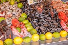食物新鲜的海运 免版税库存照片