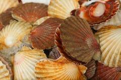 食物海运 免版税图库摄影