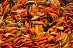 食物的繁忙的拥挤饥饿的五颜六色的Koi鱼或花梢鲤鱼群 库存图片
