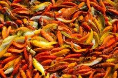 食物的繁忙的拥挤饥饿的五颜六色的Koi鱼或花梢鲤鱼群 免版税图库摄影
