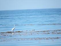 食物的鸟狩猎在海滩 免版税库存照片