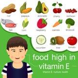 食物的以图例解释者高在维生素E 皇族释放例证