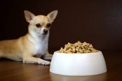 食物碗的狗透视 免版税库存照片