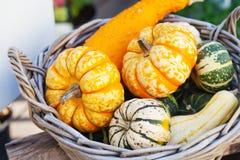 食物篮子概念 在木柳条的五颜六色的万圣夜南瓜 秋天农夫收获,概念性感恩的天 库存图片