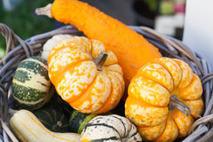 食物篮子概念 在木柳条的五颜六色的万圣夜南瓜 秋天农夫收获,概念性感恩的天 图库摄影