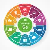 10食物高在硒 营养infographics 免版税图库摄影