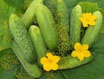 食物,蕃茄,菜,菜,新鲜,黄瓜,胡椒,健康,绿色,红色,素食,农业,葱,夏南瓜,器官 图库摄影