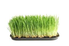 食物:在白色的本地出产的麦子草 免版税图库摄影