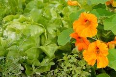 食用植物在一个有机庭院里 图库摄影