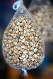 食用蜗牛 免版税库存图片