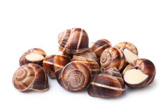 食用蜗牛(escargot) 免版税库存照片