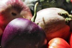 素食者Egglant 免版税图库摄影