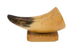 食肉动物的动物犬齿象牙木董事会装饰白色 库存照片