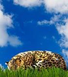 食肉动物的图象在草的 库存照片