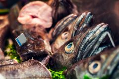 食肉动物的鱼头在市场上 库存照片