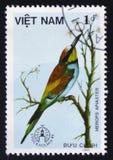 食蜂鸟属apiaster,大约1986年 免版税库存图片