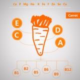 素食食物 维生素和矿物内容的Infographic在红萝卜 免版税库存照片