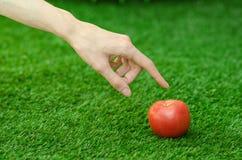素食主义者和新鲜的水果和蔬菜在题材的本质:拿着在绿色gr的背景的人的手一个红色蕃茄 免版税库存照片