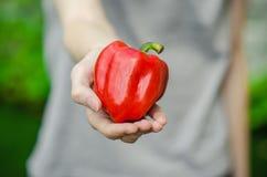 素食主义者和新鲜的水果和蔬菜在题材的本质:拿着在绿色gr的背景的人的手一个红辣椒 免版税库存照片