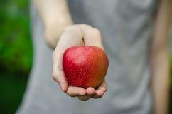 素食主义者和新鲜的水果和蔬菜在题材的本质:拿着在绿色gra背景的人的手一个红色苹果  库存图片
