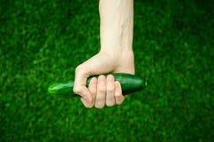 素食主义者和新鲜的水果和蔬菜在题材的本质:拿着在绿色gras背景的人的手一个黄瓜  免版税库存图片